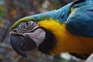 parrot-358358_640